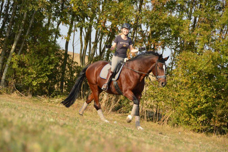 Faules Pferd beim Ausreiten im Gelände