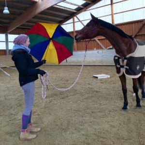 Schreckhaftes Pferd mit Regenschirm